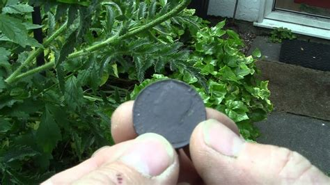 Metal Detecting finds - YouTube