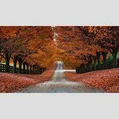 Autumn Tree All...
