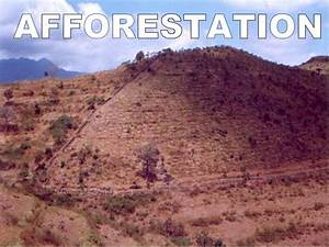 essay about deforestation afforestation in india