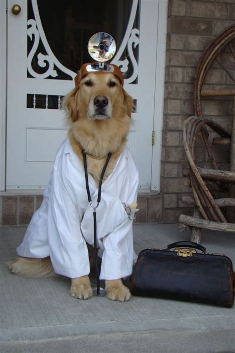 dogs golden halloween costumes dog doctor retriever pet costume funny retrievers labrador animal call cards cute tyler greeting credit simply