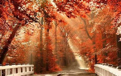 Autumn Desktop Backgrounds Pumpkin Wallpapers Cave