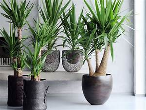 Plantes Pour Chambre : comment choisir mes plantes d int rieur blog prosuma leader de la grande distribution en ~ Melissatoandfro.com Idées de Décoration