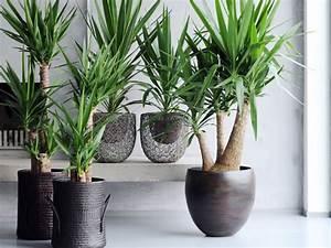 yuka plante verte florideeo With salle a manger yucca