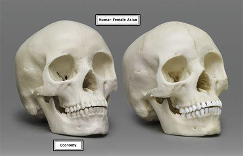 About The Bone Clones® Economy Series