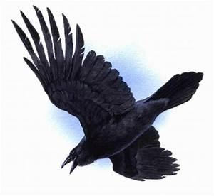 Raven clipart | Clipart Panda - Free Clipart Images
