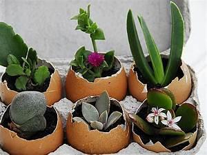 Welche Blumen Kann Man Essen : eierschalen sollten niemals entsorgt werden mit ihnen ~ Watch28wear.com Haus und Dekorationen