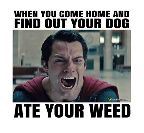 Hilarious Weed Memes - superman s dog ate his weed funny marijuana humor memes