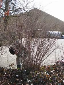 Wann Wird Lavendel Geschnitten : winterschnitt geh lzschnitt ~ Lizthompson.info Haus und Dekorationen