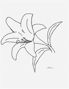 Tiger Lily Flower Coloring Pages