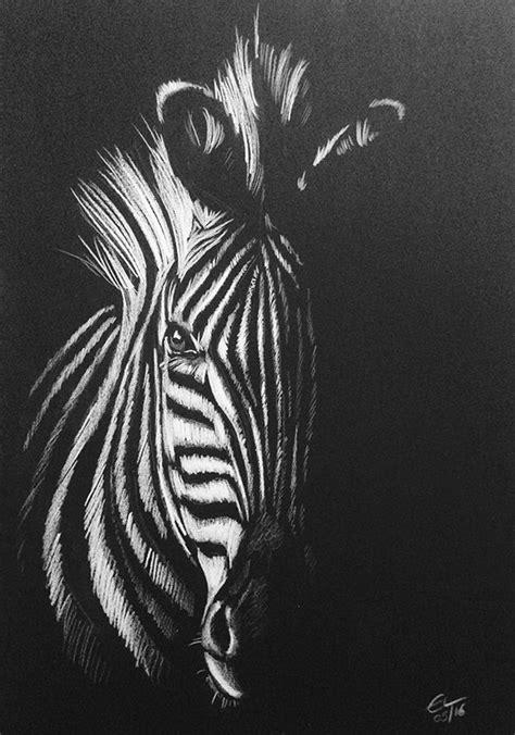 zebra white pencil drawing  black paper zebra art