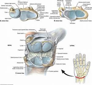 Duke Anatomy