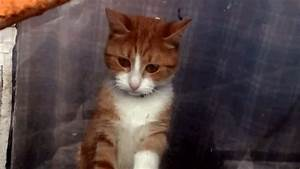 Sad Kitty GIF - Find & Share on GIPHY