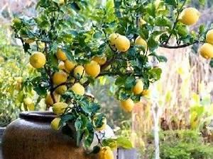 Arbres Fruitiers Nains En Pleine Terre : les arbres fruitiers nains guide pratique ~ Premium-room.com Idées de Décoration