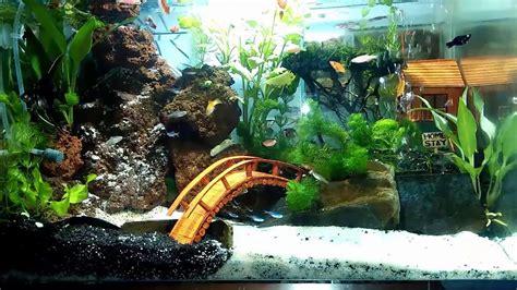 aquascape indonesia aquascape buatan bangsa indonesia nomor satu