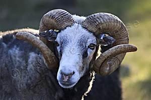 Animals - Mammals - Pets - Gutebagge © wic-20110531_01190 ...