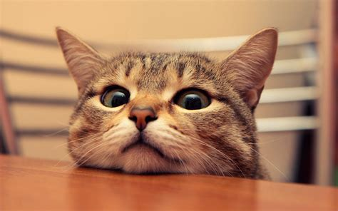 Funny Cats Wallpapers (57+ Images