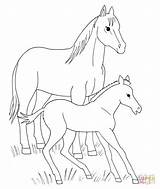 Horse Coloring Pages Baby Foal Horses Printable Spirit Animals Foals Drawing Animal Miniature Template Supercoloring Drawings Movie Clipart Cute Print sketch template