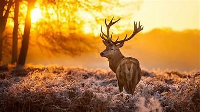 Deer Winter Jungle Season During Wallpapers Animals
