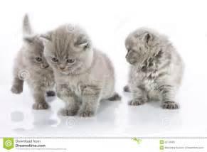 Cute Kittens Playing