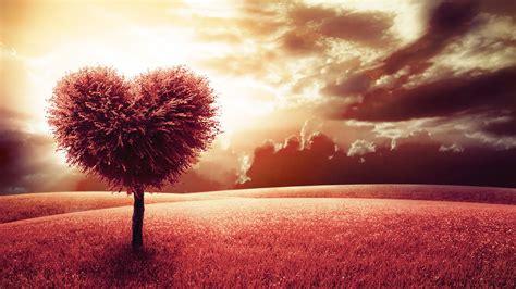 Schöne Blumenstrauß Bilder by Die 77 Besten Liebe Sch 246 Ne Hintergrundbilder F 252 R Desktop