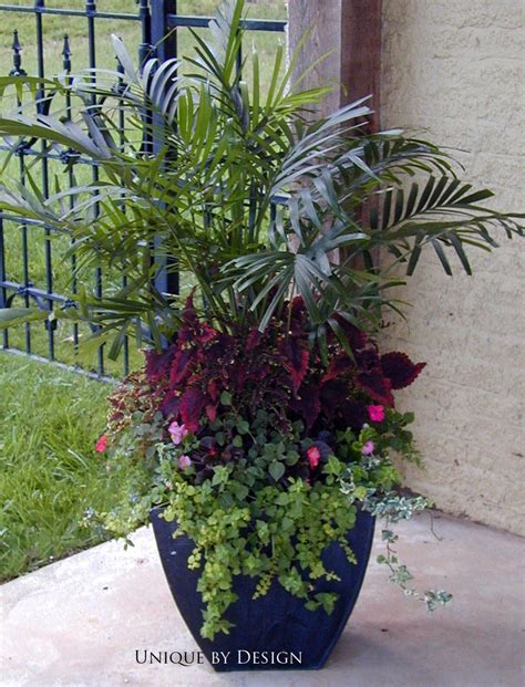 love  height variation adds character beautiful arrangement container gardens