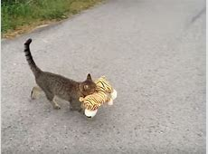 Pfiffige Katze klaut Kuscheltier vom Nachbarn