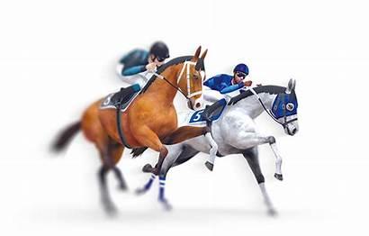 Virtual Horse Racing Dog Races Greyhounds Nsoft