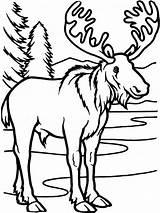 Coloring Elk Deer Printable Adult Moose October sketch template