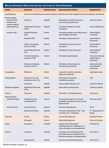 Endocrine System Hormones Chart