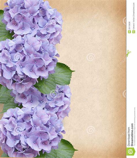hydrangeas border royalty  stock  image