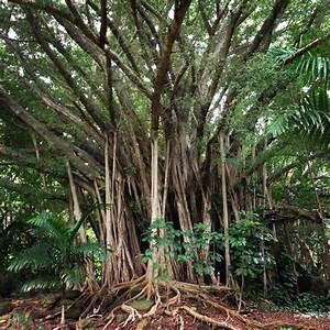 Pin by ActivityKauai com on Kauai Flora Pinterest