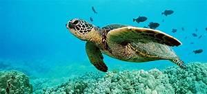 Tagging aquatic animals can disrupt natural behaviour  Aquatic