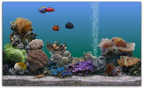 fond d aquarium 3d desktop background fond d 233 cran gratuit aquarium qui bouge