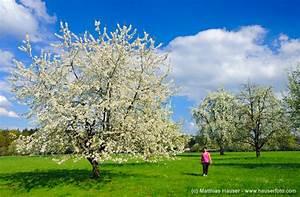 Rosa Blühender Baum Im Frühling : matthias hauser fotografie naturpark sch nbuch im fr hling ~ Lizthompson.info Haus und Dekorationen