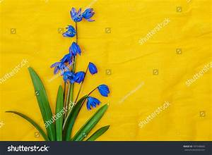 Blue Spring Flowers On Yellow Background Stock Photo ...