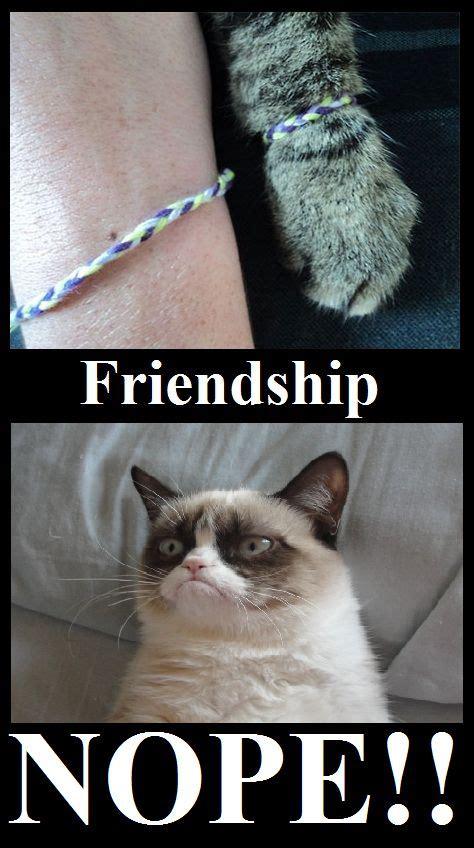 Friendship Meme - grumpy cat friendship meme cute animals pinterest