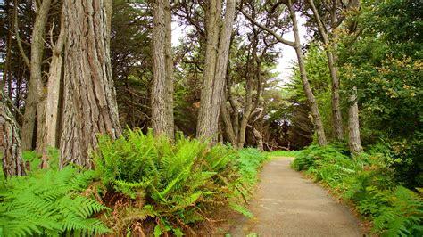 mendocino coast botanical gardens mendocino coast botanical gardens in fort bragg