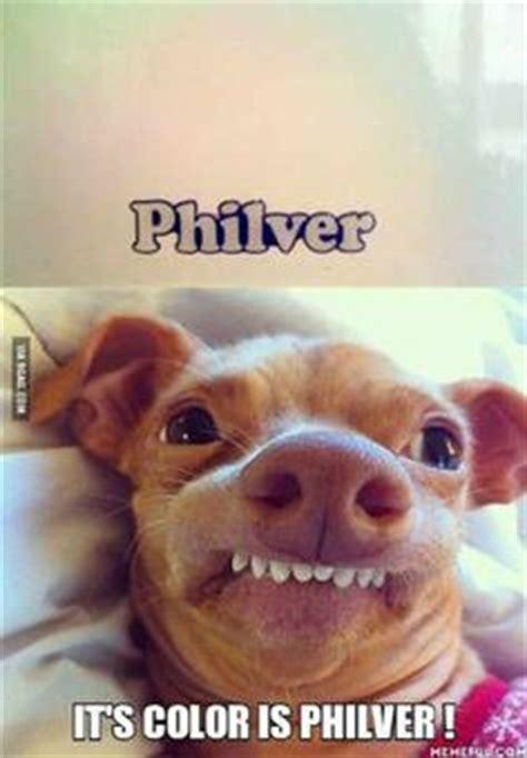 Stephen Dog Meme - phteven the dog on pinterest pho dump a day and dogs