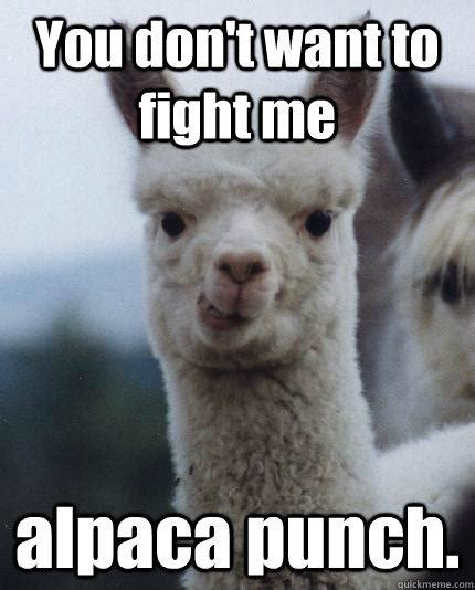 Fight Me Meme - you don t want to fight me alpaca punch