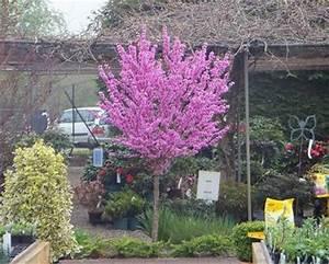 Kleine Laubbäume Für Den Garten : preview ~ Michelbontemps.com Haus und Dekorationen
