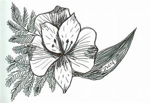 Stargazer Lily Pencil Coloring Pages