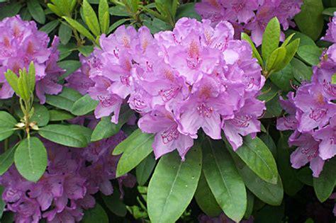lade a led per piante casa immobiliare accessori fiori azalea