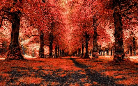 Red Forest, Landscape, Path Wallpaper  Nature And