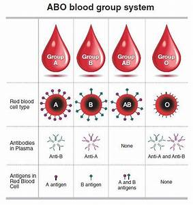 Weekender  What Blood Types Are Really About