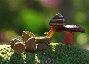 Interesting Photo Of The Day  Snail Sips From Acorn Shell