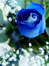 Best Rose Quotes Ideas And Images On Bing Find What You Ll Love