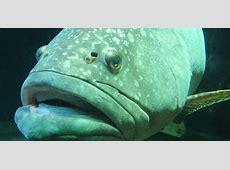 Los animales acuáticos más grandes del mundo marino Zoo