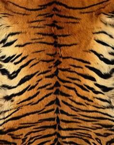 tiger skin - Google Search | Doodle Reference Patterns ...