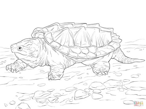 Walking Alligator Snapping Turtle Coloring Page Free