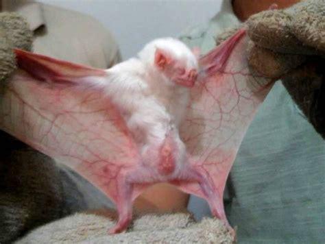 100000+ Albino Animals Are Around The World